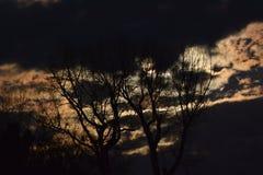 Полнолуние за золотыми ночными небесами и пугающими деревьями Стоковое Изображение