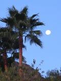 Полнолуние и пальма стоковые изображения rf