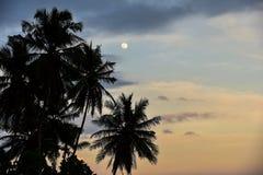 Полнолуние silhouettes пальмы Стоковая Фотография