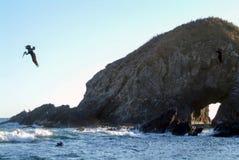 Подныривание пеликана Брайна в воду для рыб Стоковые Фотографии RF