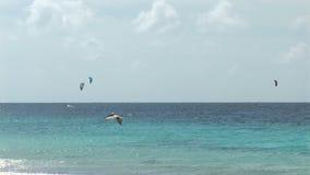 Подныривание пеликана в океане видеоматериал