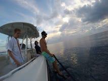 Подныривание Флорида Стоковые Изображения RF