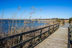 Поднятая дорожка через болото на задней охраняемой природной территории соотечественника залива стоковые фото
