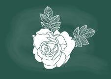 Поднял, вектор чертежа цветка розы на меле классн классного Стоковые Изображения RF