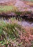 Поднял в болото Стоковые Фото