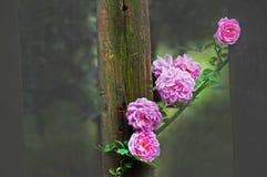 Поднял и деревянный строб Стоковое Фото