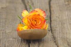Подняли и лепестки розы Стоковое Изображение RF
