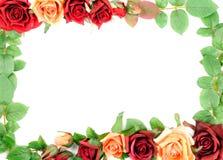 Подняли и leafes Стоковое Изображение RF