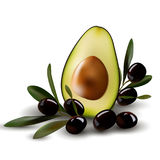 Половина авокадоа с оливковыми ветками Стоковое фото RF