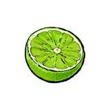 Половина зрелой зеленой известки, иллюстрации вектора эскиза бесплатная иллюстрация