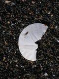 Половина доллара песка на пляже гравия стоковые изображения