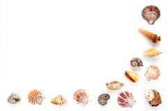 Половинная рамка Seashells на белой предпосылке Стоковые Изображения RF