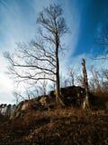Половинное дерево Стоковая Фотография