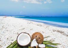 Половины кокоса на листьях ладони Стоковая Фотография RF