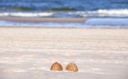 Половины кокоса на пляже, предпосылке природы Стоковые Фото
