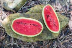 2 половины красного арбуза лежат на большом камне Стоковые Фотографии RF