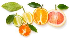 Половины цитрусовых фруктов Стоковое Изображение