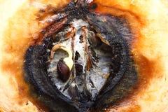 Половины яблока крупного плана тухлые. Пищевые отходы. Стоковое Изображение RF