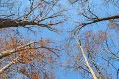 Полог леса в последнем падении Стоковое фото RF