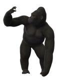 Положение гориллы, обезьяна изолированная на белой предпосылке Стоковое фото RF