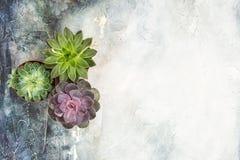 Положение квартиры суккулентных заводов минимальное флористическое стоковые изображения