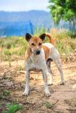 Положение собаки стоковое фото rf