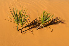 положение США Юта песка пинка парка kanab дюн коралла Стоковое Фото