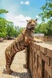 Положение тигра Стоковые Изображения RF