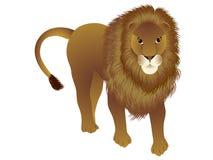 Положение льва Стоковая Фотография RF