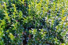 Положите завод в коробку дерева в саде на весне Стоковое Изображение