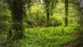 положите хобот в постель валов вала солнечности весны зеленых заводов пущи цветков Стоковое Фото