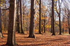 Положительный лес осени флюидов Стоковые Изображения