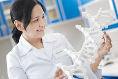 Положительный жизнерадостный ученый имея модель дна в ее руках Стоковое фото RF