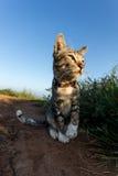 Подозрительный портрет кота Стоковые Изображения RF