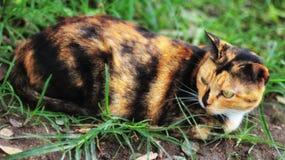 Подозрительный портрет кота Стоковая Фотография