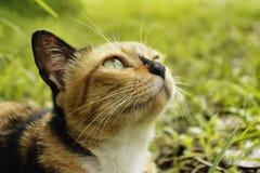 Подозрительный портрет кота Стоковые Изображения
