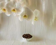 Поддонник состава с кофейными зернами Стоковое Изображение