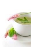 Подорожник, лекарственное растение, травяной изолированный чай Стоковое Изображение RF