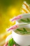 Подорожник, лекарственное растение, травяной чай Стоковая Фотография
