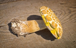 Подосиновик гриба над деревянной предпосылкой стоковые фотографии rf
