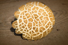 Подосиновик гриба над деревянной предпосылкой Стоковые Изображения RF