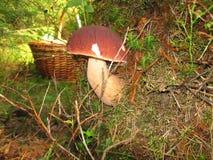 Подосиновик гриба Стоковая Фотография RF