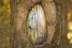 Полость в конце-вверх дерева в лесе Стоковые Фотографии RF