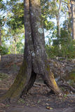 Полость дерева Стоковое Фото