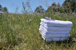 Полотенца на луге с фиолетовыми цветками Стоковые Изображения