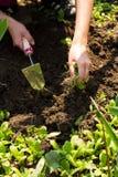 Полоть - садовничающ Стоковая Фотография RF