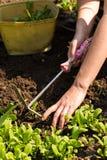 Полоть - садовничающ Стоковое Фото
