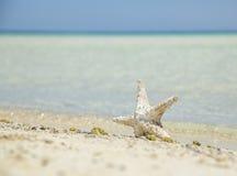 подпирайте starfish Стоковая Фотография