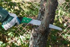 Подрезая дерево Стоковая Фотография