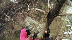 Подрезая деревья видеоматериал